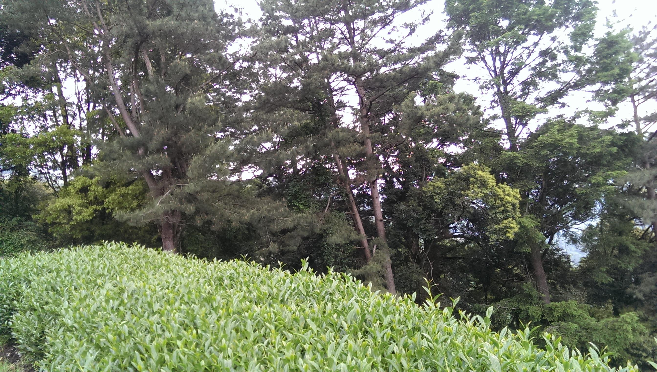 5.原始森林